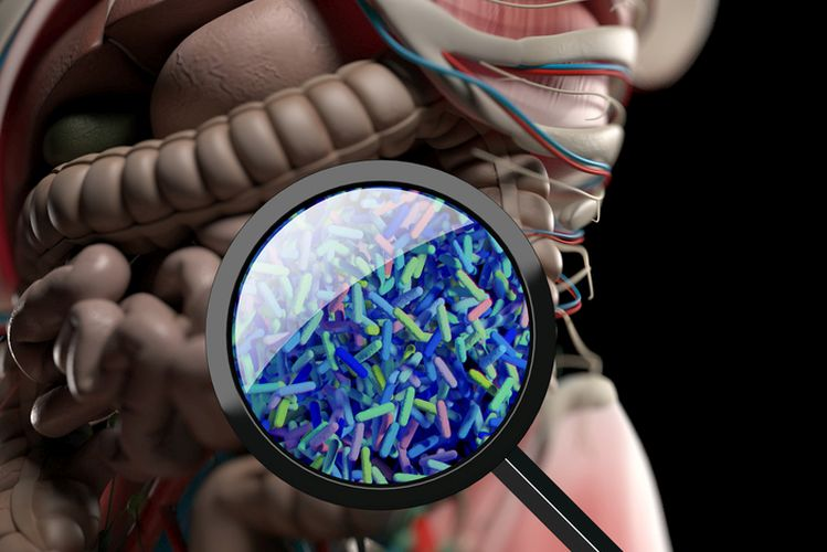 microbiome. Bacteria magnified through magnifying glass, concept, representation